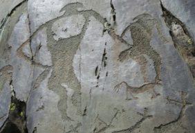 Петроглифы в урочище Калбак-Таш
